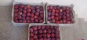 میوه خشک آلو