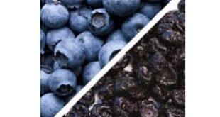 میوه خشک بلوبری